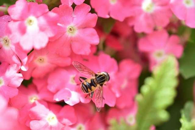 手振れ補正のないマクロなハチ.jpg