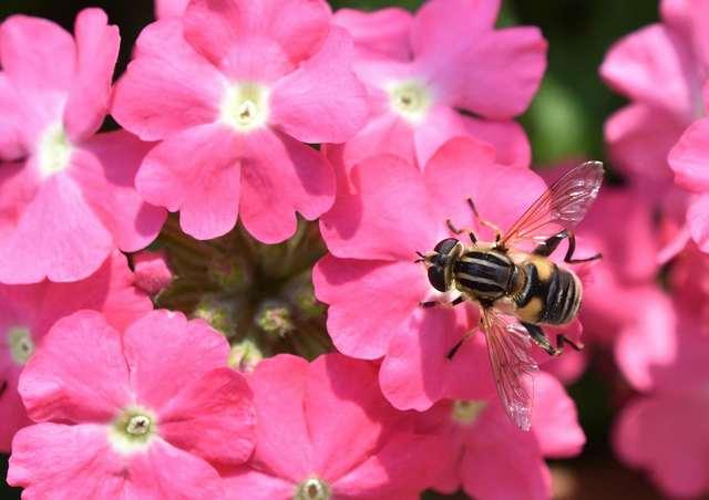 手振れ補正のないマクロなハチ2.jpg