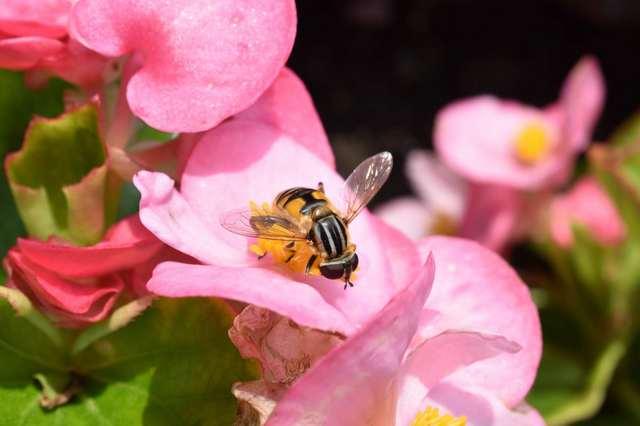 手振れ補正のないマクロなハチ4.jpg